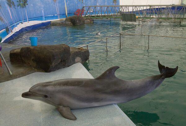 Дельфины и особенности их проживания в неволе. Справка