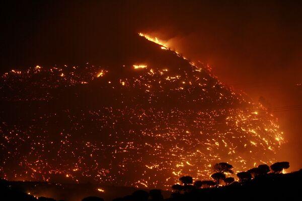 Пожары в Греции начались из-за сожженного осиного гнезда - следствие