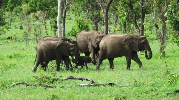 Национальный парк Чобе в Ботсване
