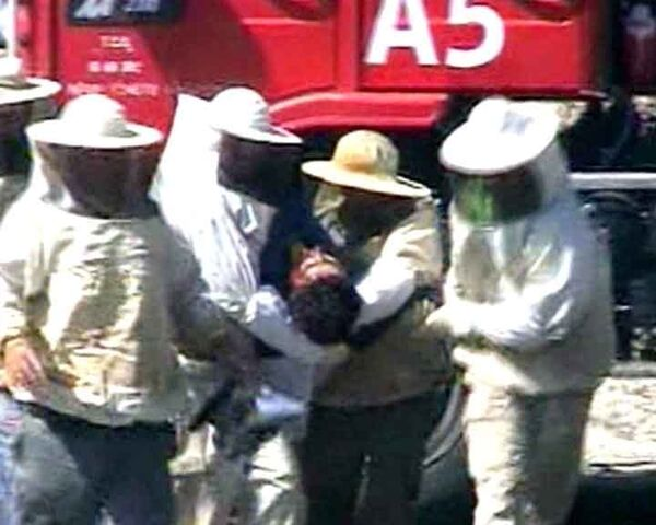 Пчелиный рой атакует раненых в ДТП людей. Видео с места события