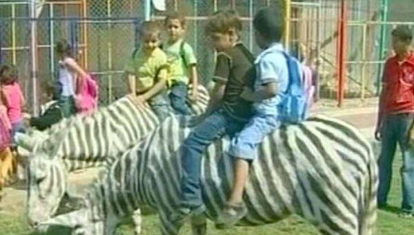 Раскрашенные ослы работают в зоопарке зебрами