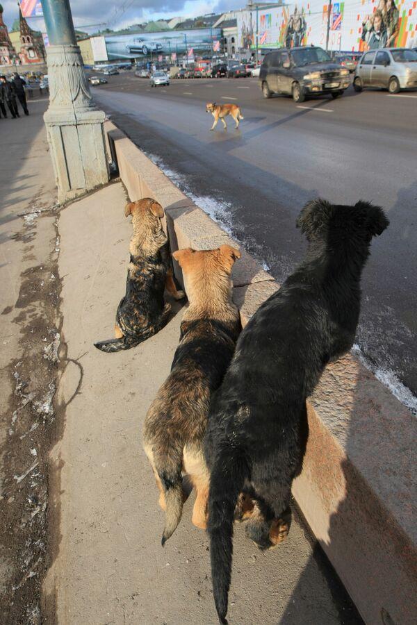 Звезды кино будут призывать москвичей приютить бездомных собак