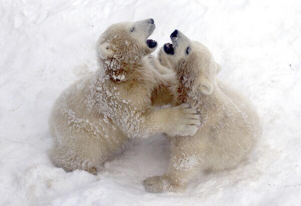 Медвежата в зоопарке Санкт-Петербурга