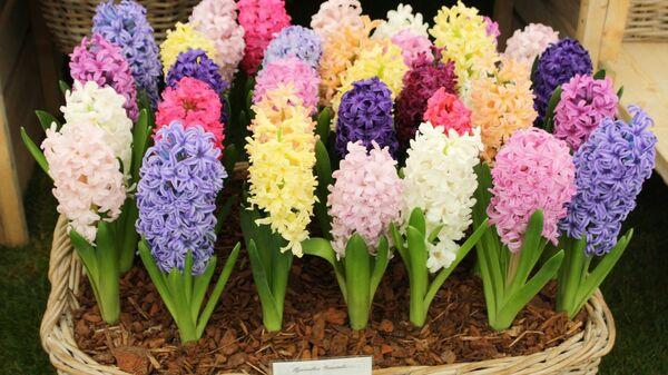 Цветочное шоу в Челси