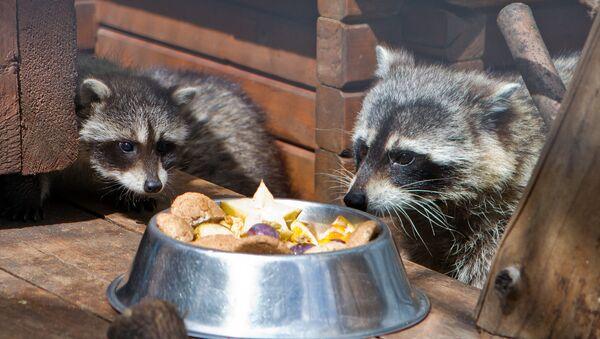 Животные в зоопарке, фото из архива