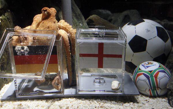 Осьминог по имени Пол предугадал все три исхода матча чемпионата мира по футболу с участием сборной Германии
