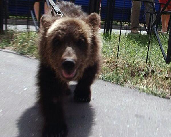 Москвичка вынуждена держать подаренного медведя на стройке