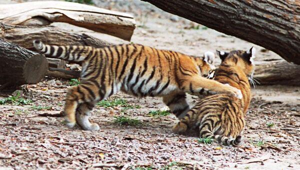 Тигрята. Архив