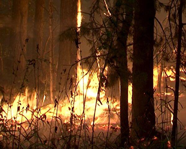 Пламя природных пожаров добралось до Луховицкого района