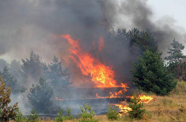 Лесные пожары под Воронежем