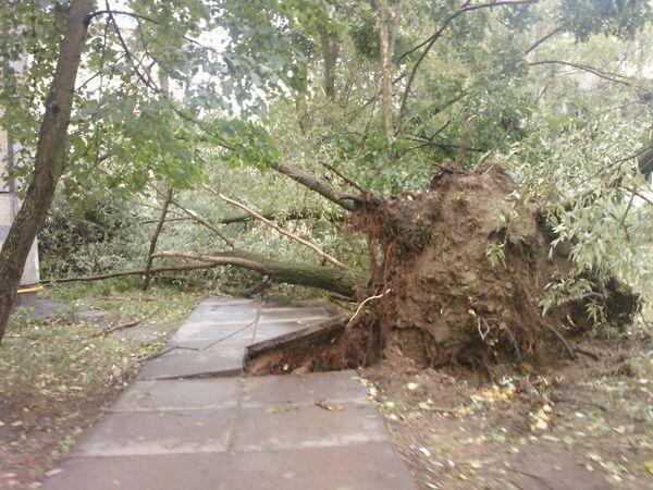Ураган в Тосно Ленинградской области