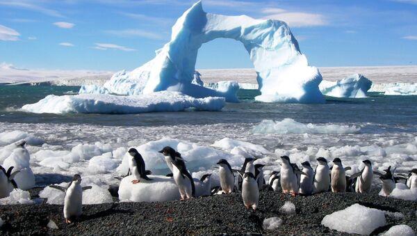 Пингвины адели в Антарктиде, архивное фото