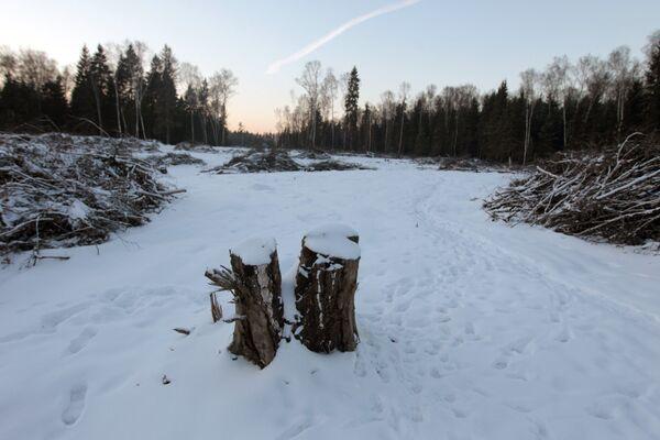 Место будущего строительства трассы Москва - Санкт-Петербург в Химкинском лесу