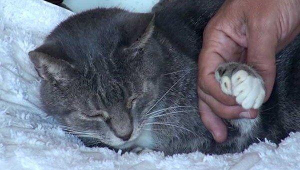 коронавирус кошек сколько живут