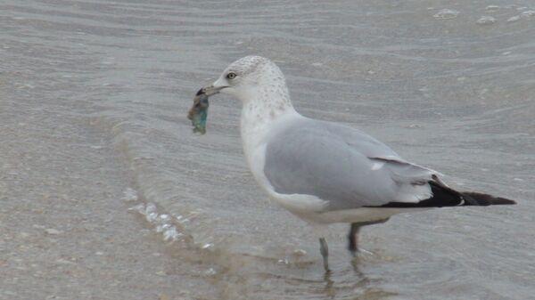 Птицы Флориды не знают зимы
