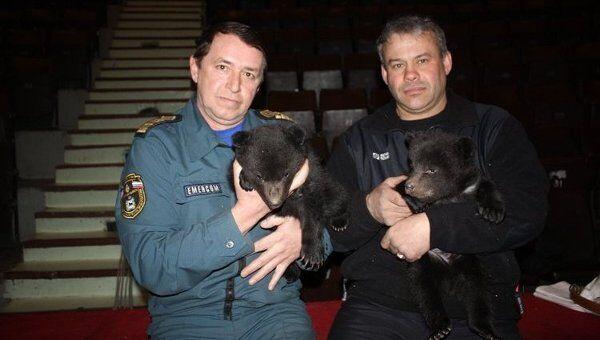 Двое медвежат спасены сотрудниками МЧС и переданы в цирк