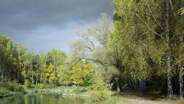 Леса России. Архивное фото