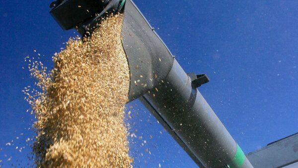 Зерновые интервенции в РФ должны начаться скорее - Путин