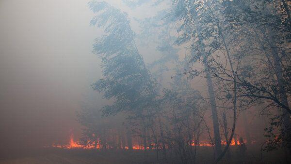 Природные пожары в Рязанской области