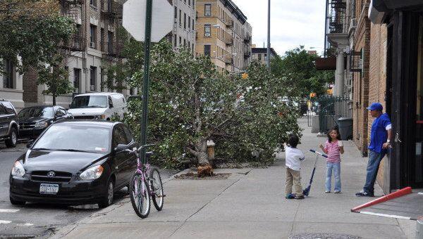 Последствия урагана Айрин в Нью-Йорке. Сваленное штормом дерево.