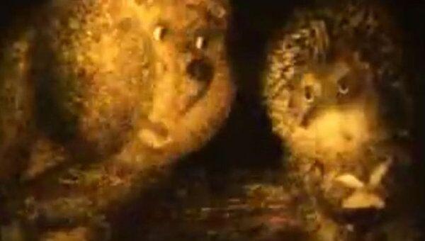 Фрагменты самых известных мультфильмов Норштейна. К 70-летию режиссера