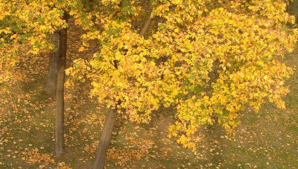 Золотая осень в Царицыно