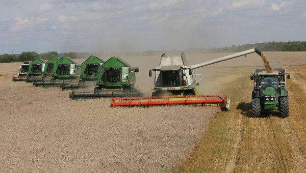 Уборка пшеницы на полях, архивное фото