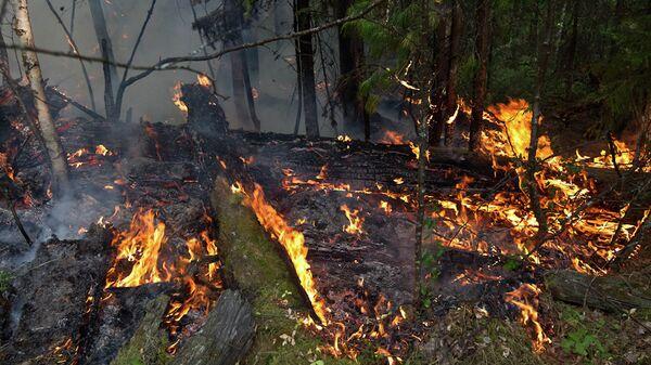 Пожары в лесах Томской области