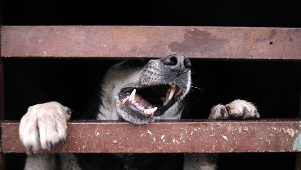 Бездомная собака в пункте временного содержания. Архивное фото