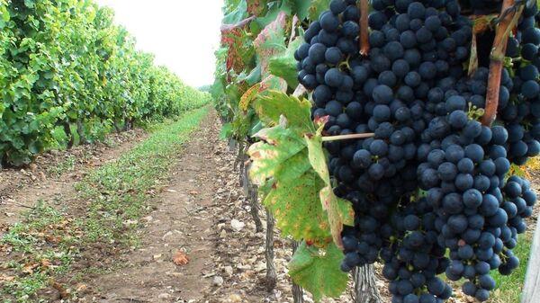 Рост акцизов ударит по импортным винам, уверен эксперт