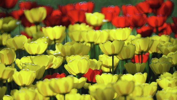Клумба с тюльпанами. Архивное фото