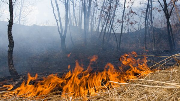 Пожар на Земле Леопарда
