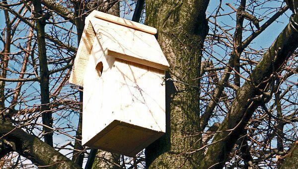 Пение птиц тем сложнее, чем более изменчив климат в месте их обитания