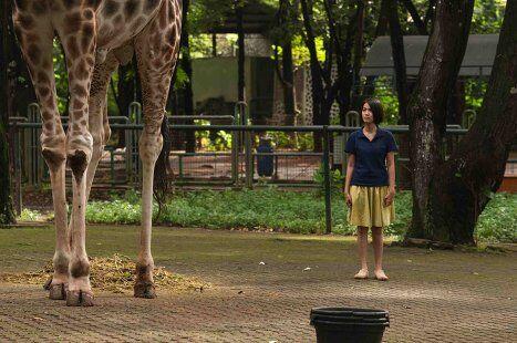 Кадр из фильма Открытки из зоопарка (Kebun binatang / Postcards From The Zoo)