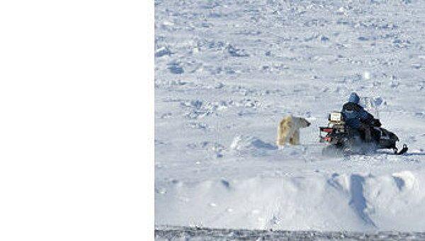 Работа Медвежьего патруля на Чукотке. Архивное фото