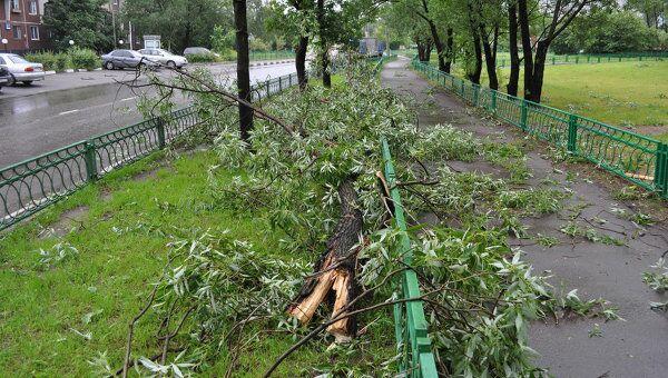 Последствия грозы в московском районе Гольяново 13 июня 2010 г.