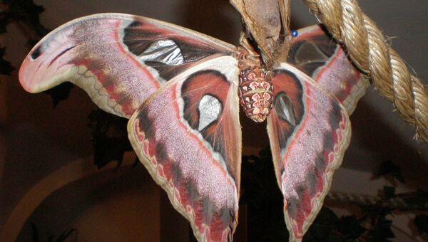 бабочки выставка Петербург
