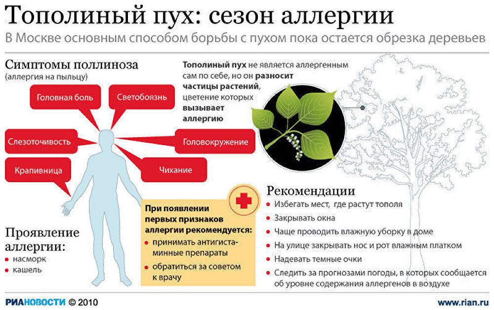 Тополиный пух: сезон аллергии