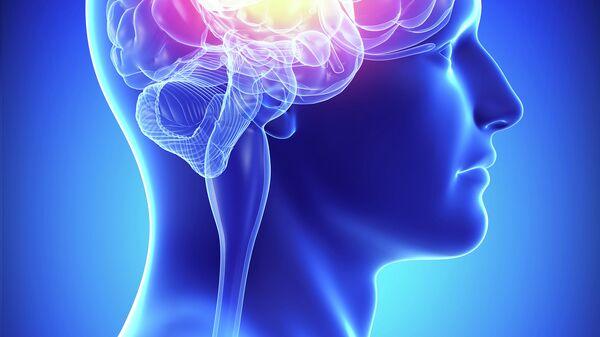 Мозг, архивное фото