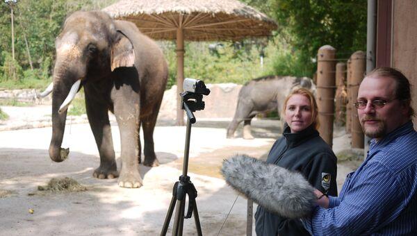 Говорящий слон по кличке Кошик в корейском зоопарке Эверленд в городе Йонъин