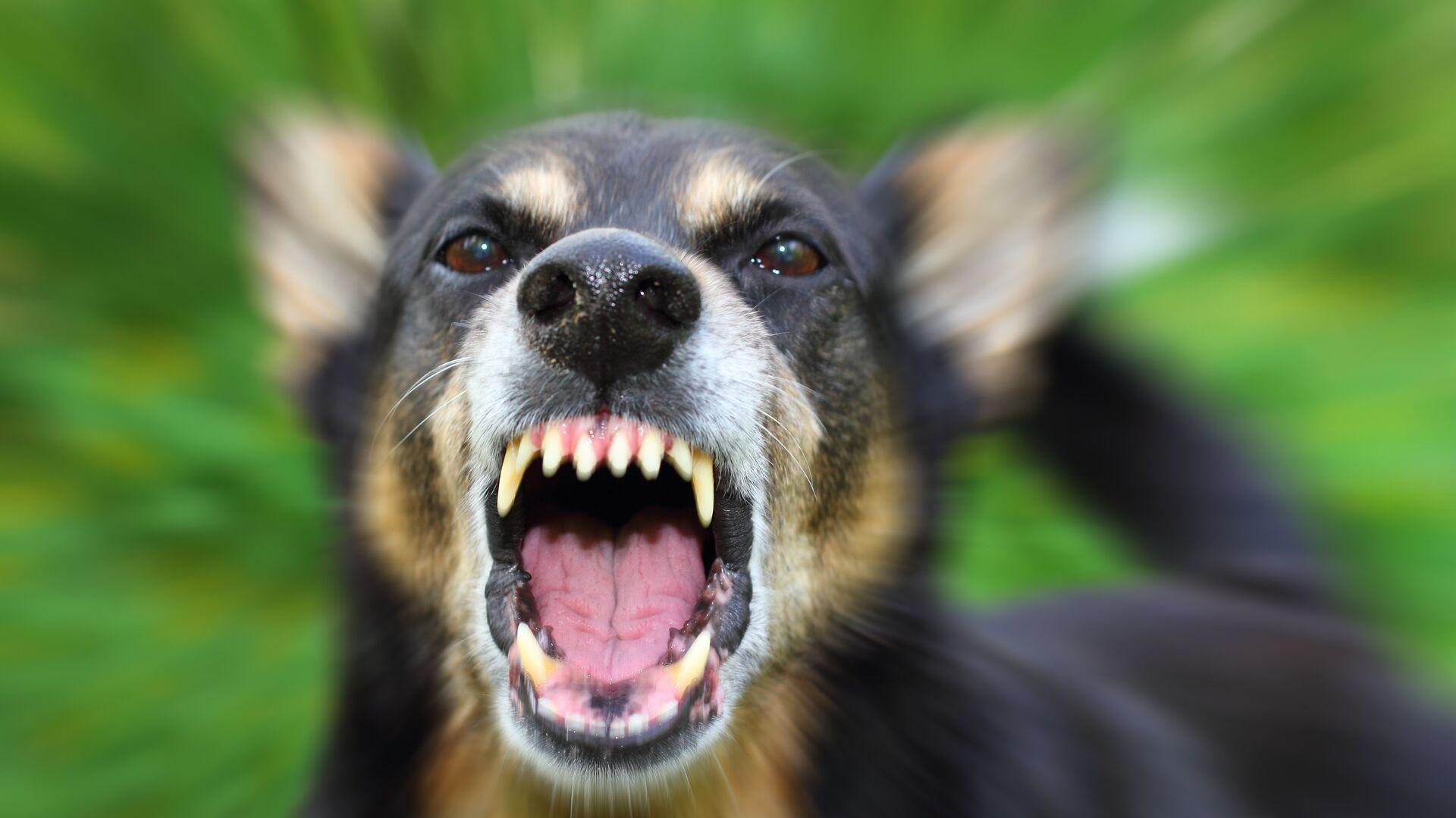 Злая собака - РИА Новости, 1920, 08.07.2020