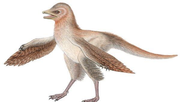 """""""Подстриженный"""" пернатый динозавр, найденный в отложениях юрского периода в китайской провинции Ляонин"""