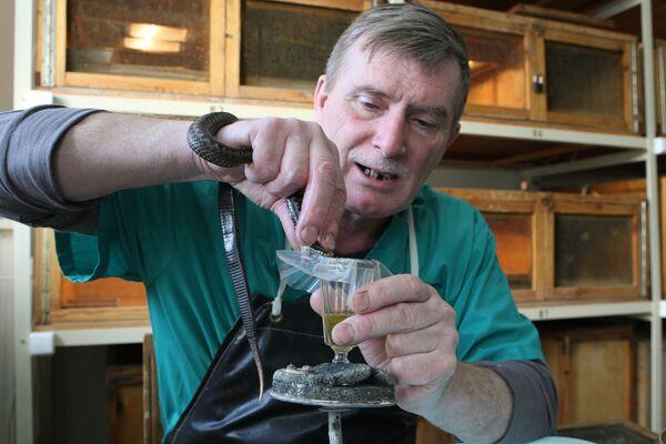Герпетолог Александр Писарев во время отбора яда у гадюки