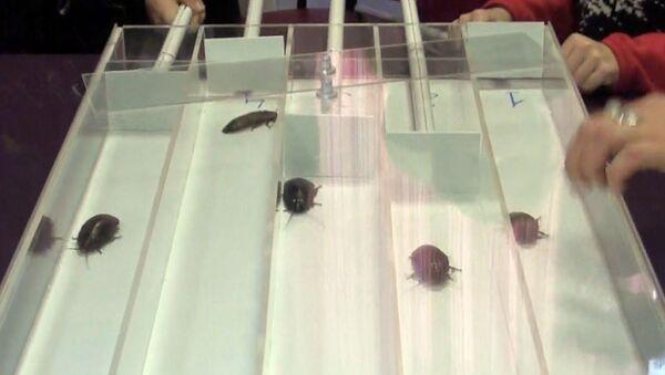 Тараканы убегали с дорожек во время соревнований в пермском зоопарке