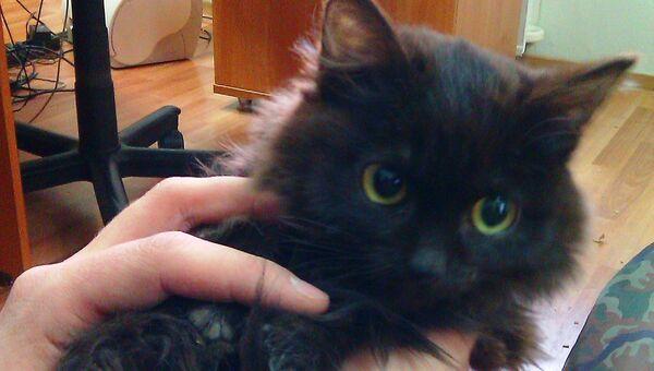 Котенок, которого просит приютить отшельница Агафья Лыкова