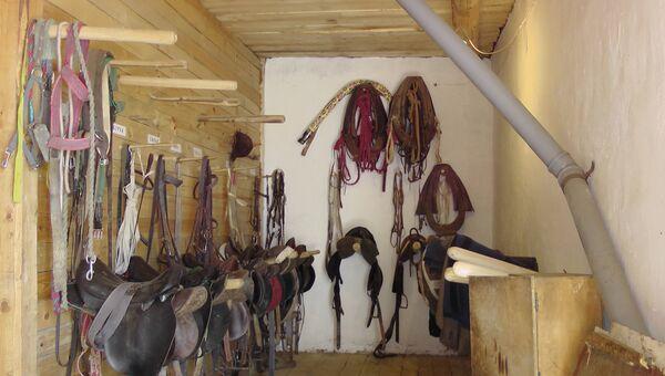 Интерактивный музей Все о лошадях под Костромой