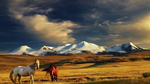 Степи Монголии