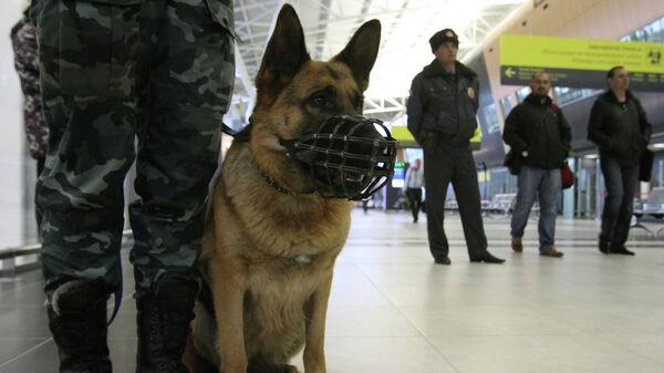 Сотрудники правоохранительных органов с собакой. Архивное фото