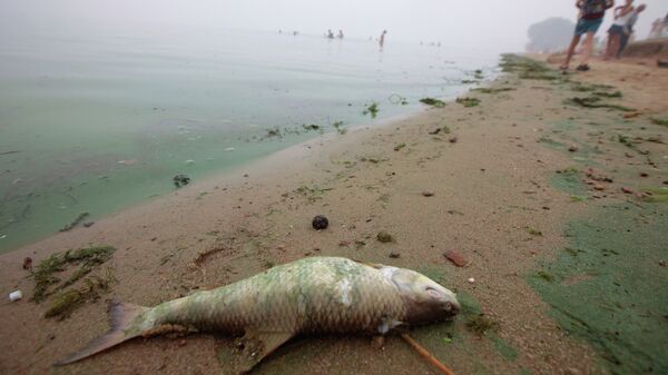 Мертвая рыба.