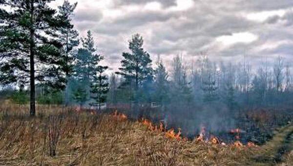 В Выксунском районе зарегистрирован лесной пожар на площади 10 га